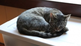5 ნიშანი, რომ თქვენი კატა თავს მარტოსულად გრძნობს
