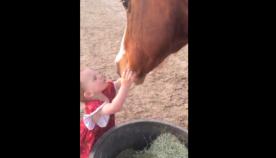ორი წლის გოგონა ყოველი ძილის წინ ცხენებს კოცნის, ეხუტება და მშვიდ ღამეს უსურვებს (ემოციური ვიდეო)