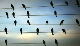 რატომ არ არტყამს დენს ელექტროსადენზე მჯდომარე ჩიტებს?