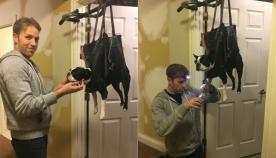 გენიალური მოფიქრება ძაღლების მოყვარულებისთვის - როგორ დავაჭრათ ბრჭყალები შინაურ ბინადარს ისე, რომ არ დაგვკბინოს