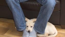 აი, რატომ უყვარს ძაღლს პატრონის ფეხთან წოლა