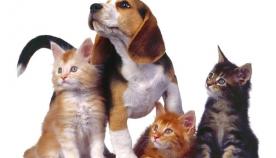 ძაღლების და სხვა ცხოველების უცნაური მეგობრობა