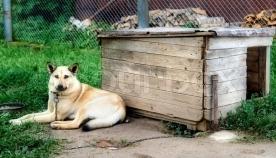 რა უნდა გავითვალისწინოთ, თუ ძაღლი სოფლის გარემოშია