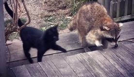 უსინათლო ენოტმა კნუტები ადამიანთან მიიყვანა და მათი სიცოცხლე გადაარჩინა