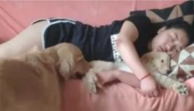 ეჭვიანი ძაღლის სასაცილო რეაქცია, როდესაც პატრონთან ჩახუტებული ლეკვი დაინახა (სახალისო ვიდეო)