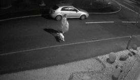 მამაკაცმა თავისი ძაღლი ქუჩაში მიატოვა. ოთხფეხა არსება მთელი ძალით მისდევდა მის მანქანას (ემოციური ვიდეო)