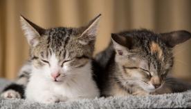 კატისთვის ძილი აუცილებელია
