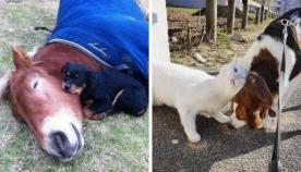 განსხვავებული სახეობის ცხოველები, რომლებმაც მეგობრობის ფასი იციან (18 ფოტო)
