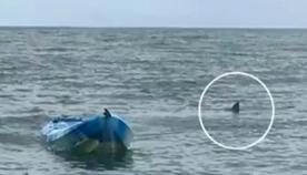 ოთხმეტრიანმა ზვიგენმა გოგონა ჰაერში ააგდო და...