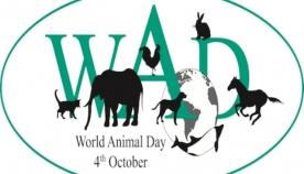 4 ოქტომბერს მსოფლიოში ცხოველთა დაცვის საერთაშორისო დღეს აღნიშნავენ