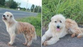 ძაღლი 4 წლის განმავლობაში პატრონს გზაზე ელოდა... ყველას ეგონა, რომ ის მიატოვეს