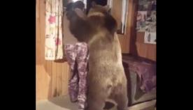დათვი მამაკაცს სახლში ესტუმრა და მეგობრულად მხარზე თათი გადახვია (სახალისო ვიდეო)