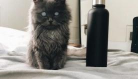 კატა მერლინი, უჩვეულო გარეგნობით, ყველას გულს იპყრობს (+ფოტო)