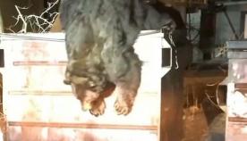ნაგვის ურნაში ჩავარდნილი დათვი პოლიციელმა გადაარჩინა (ემოციური ვიდეო)