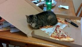 კატები, რომლებსაც ადამიანების წესები საერთოდ არ აინტერესებთ (20 ფოტო)