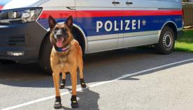 იმისათვის, რომ თათები არ დაეწვათ: ავსტრიაში ძლიერი სიცხის გამო, პოლიციაში მომსახურე ძაღლებს ფეხსაცმელი ჩააცვეს