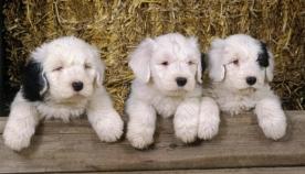 ადამიანები მეტად უთანაგრძნობენ ძაღლებს, ვიდრე მეგობრებს ან ახლობლებს და აი, რატომ...