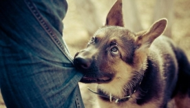 როგორ იქცევა ძაღლი, როდესაც თავს გვაწონებს...