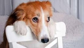სანამ ძაღლის დასჯას გადაწყვეტთ, კარგად დაფიქრდით... აი, რას ნიშნავს მისი