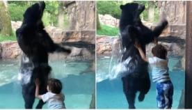 მეგობრული დათვი ბავშვის მოძრაობებს ზუსტად იმეორებს (სახალისო ვიდეო)