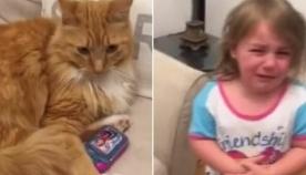 კატამ ბავშვს სათამაშო ტელეფონი წაართვა და მის დაბრუნებას არ აპირებს (+ვიდეო)