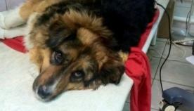 უპატრონო ძაღლმა ხანძრის დროს 8 ადამიანი გადაარჩინა (+ვიდეო)