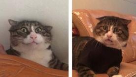 ეს კატა  სახის სასაცილო და უჩვეულო გამომეტყველებით სოციალური ქსელების ვარსკვლავი გახდა (სახალისო ფოტოები)