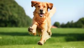 როგორ გაუხანგრძლივოთ სიცოცხლე ძაღლს?