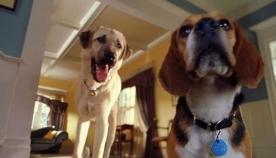 როცა ძაღლები ერთმანეთს ემტერებიან