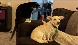 კატა ძაღლის პროვოცირებას ცდილობდა, თუმცა სახეში თათი მიიღო (სახალისო ვიდეო)