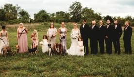 პატარძალმა თავის ქორწილში თავშესაფრის ძაღლები დაპატიჟა