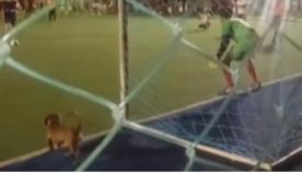 სტადიონზე შეპარულმა ძაღლმა, 11-მეტრიანის დარტყმისას,  ფეხბურთელს ხელი შეუშალა (სახალისო ვიდეო)