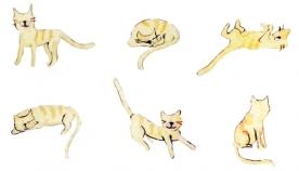 რისი მინიშნება სურს თქვენს კატას თავისი ქცევებით ?