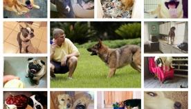 რა ეშლება ყველაზე ხშირად პატრონს ძაღლთან ურთიერთობისას?! - ანუ, პატრონის 15 ტიპიური შეცდომა