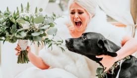 ძაღლთან ერთად გადაღებულმა ქორწილის ფოტოებმა ინტერნეტ სივრცეში პოპულარობა სწრაფად მოიპოვა