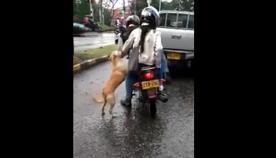 ძაღლი თავდაუზოგავად მისდევს პატრონებს, რომლებმაც შუა გზაზე მიატოვეს (ემოციური ვიდეო)