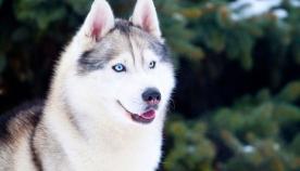 ქართული ანდაზები ძაღლზე - გაიხსენეთ სხარტი გამონათქვამები 2018 წლის მთავარ სიმბოლოზე
