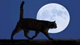 სად მიდიან კატები ღამით?