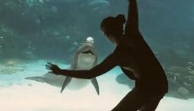 """""""ის ნამდვილად იღიმის""""... გოგონამ დელფინი უცნაური ილეთებით გაამხიარულა (სახალისო ვიდეო)"""