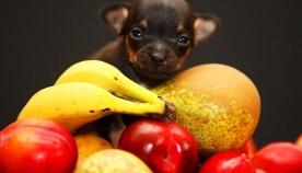 რომელი ხილი/ბოსტნეული შეიძლება ძაღლისთვის?