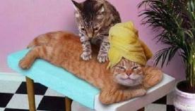 რას ნიშნავს, როდესაც კატა წინა თათებით