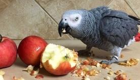 უგულობა! - პატრონმა თუთიყუში ახალი შეყვარებულის გამო მოიცილა (+ფოტო)