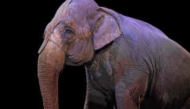 ნიუ-ჯერსის შტატის საცირკო სანახაობებში ცხოველების მონაწილეობა აიკრძალა