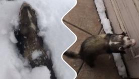 თრითინას რეაქცია, რომელმაც თოვლი პირველად იხილა (სახალისო ვიდეო)
