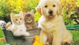 უსაფრთხო მგზავრობა ძაღლისთვის, თბილი ჰამაკი კატისთვის, სასარგებლო სასუსნავი: რამდენიმე რჩევა შინაური  ცხოველების მფლობელთათვის