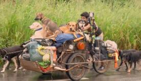მექსიკელი მოგზაური, რომელმაც 500-მდე ძაღლი გადაარჩინა