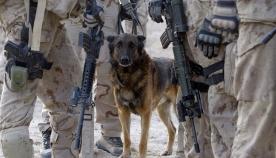 საბრძოლო ძაღლები