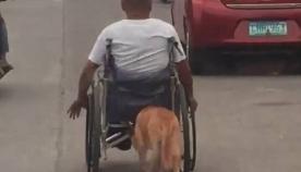 ძაღლი შეზღუდული შესაძლებლობების პატრონს ქუჩაში გადაადგილებისას ეხმარება (ემოციური ვიდეო)