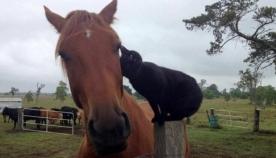 ცხენისა და კატის მეგობრობის საოცარი ისტორია (+ვიდეო)