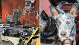 ცნობისმოყვარე ძაღლმა პატრონის სახლში ხანძარი გააჩინა (+ვიდეო)